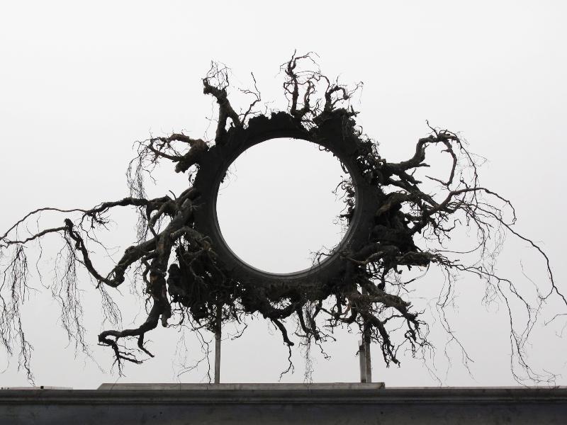 Douglas White Black Sun 2010 Fragment, racines d'if, aciers, panneau de fibres 209x 220 x 84cm Courtesy de l'artiste et de la Galerie Odile Ouizeman © Douglas White