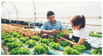 food feed greenhouse5