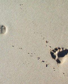 Free Images footsteps-in-the-sand-2-1498370