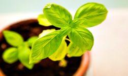 Help To Grow